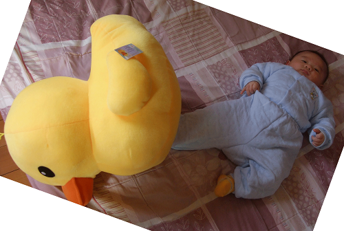 kick-yellow-duck1