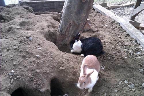 獨角仙休閒農場:兔子